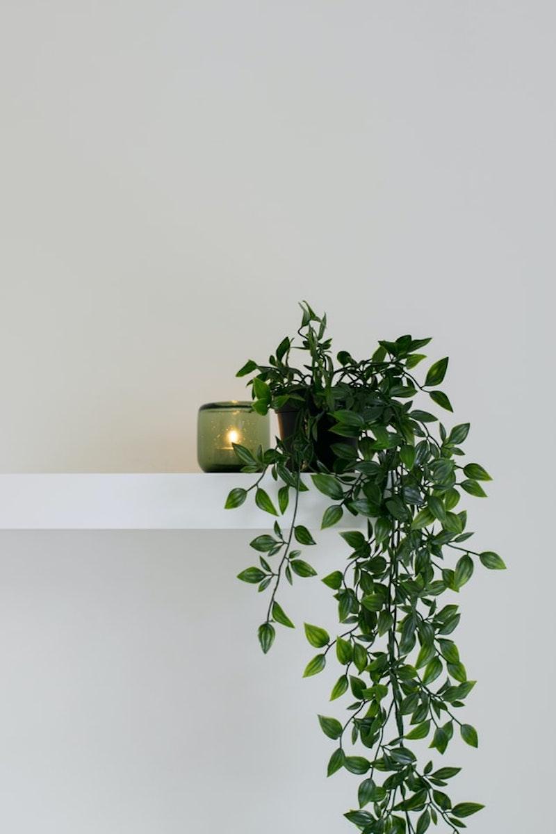 rénovation mur intérieur étagère avec une plante d intérieur