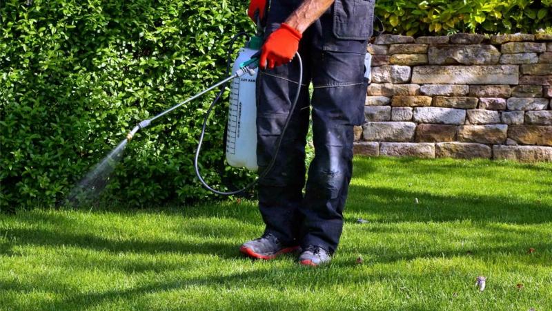 sel epsom jardin pulvériser le gazon par du sulfate magnésium