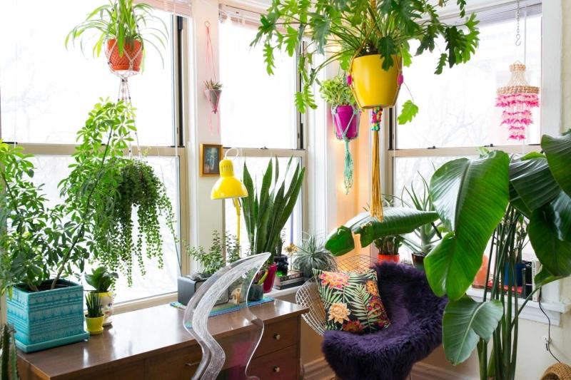 suspension macramé crochets adhésifs plantes vertes d intérieur