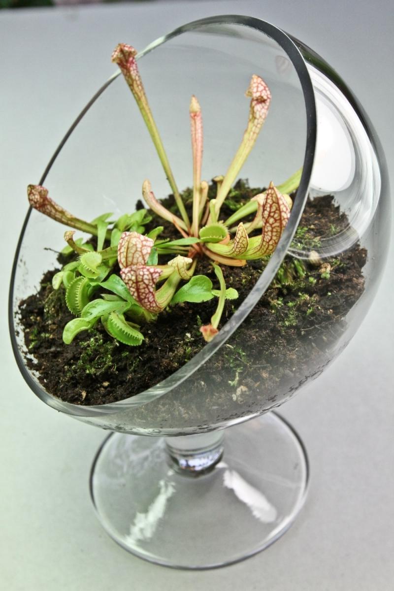 terrarium plante carnivore quel sol choisir terrarium ouvert en verre