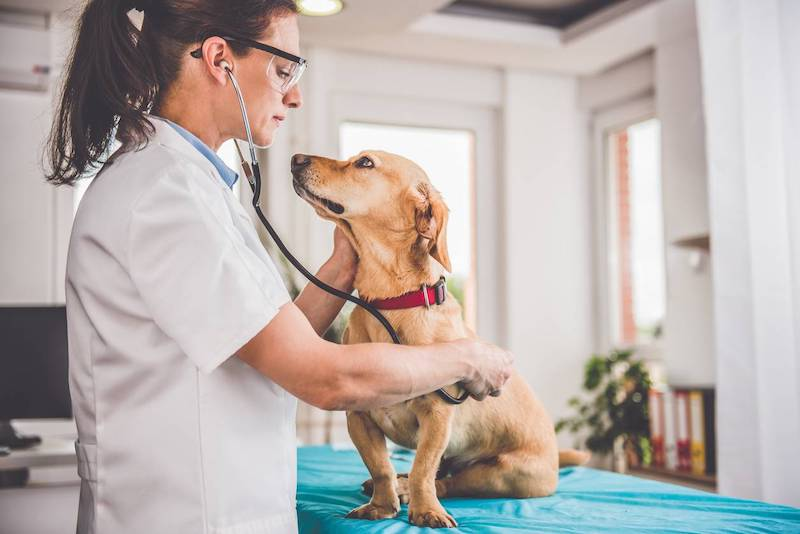 assurance comment choisir chien pour