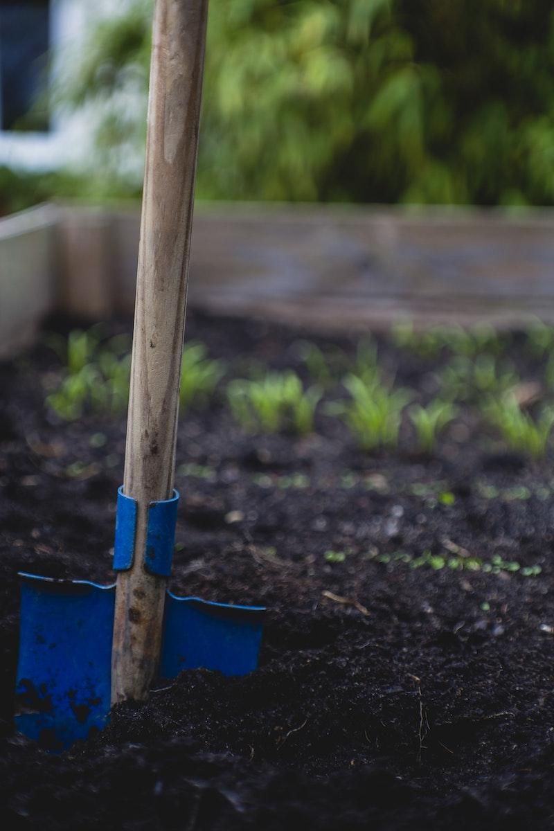 atomates en terre plates comment cultiver des plantes aromatiques vivace dans le potager