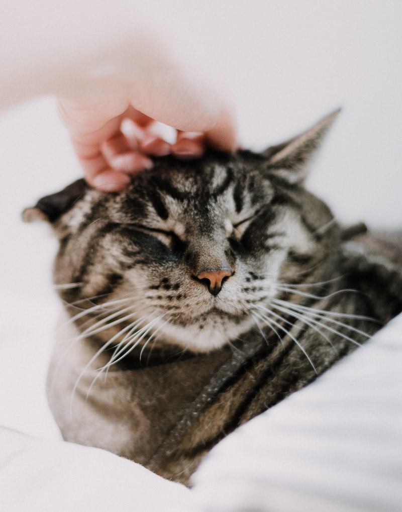 chat qui ronronne pour monter qu il est contencte ronronnement de plaisir