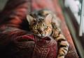 Assurance pour chien et chat : comment bien la choisir ?