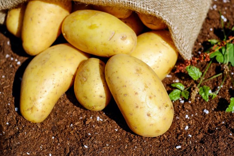 comment conserver les pommes de terre un sac de pomme de terre