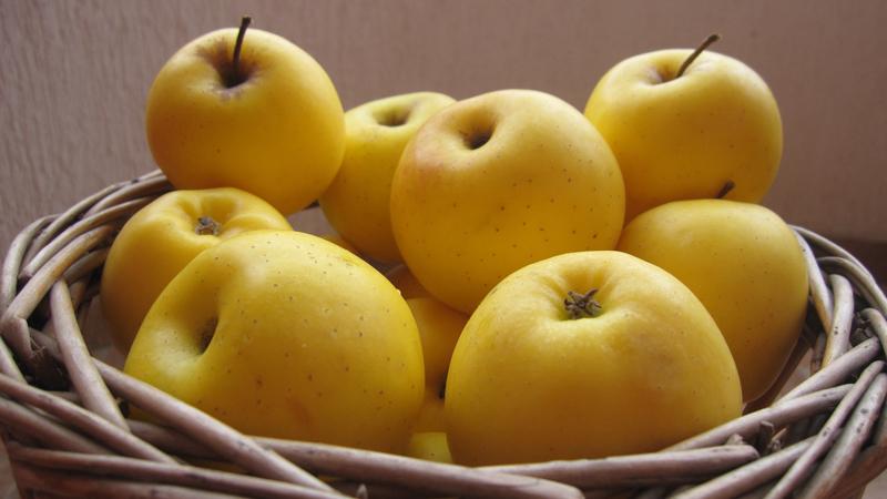 comment conserver les pommes pommes jaunes golden delicious dans un panier