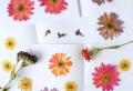 Comment faire sécher des fleurs ? Une ode aux fleurs fanées