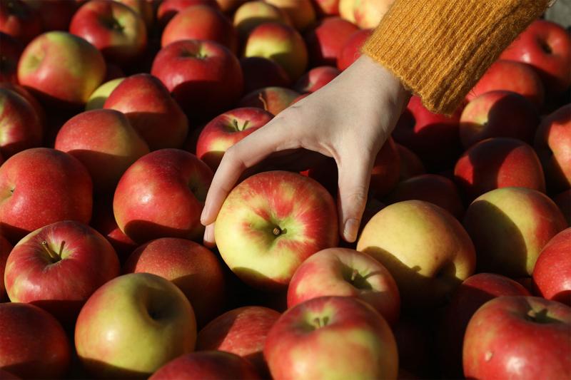 conserver compote maison une femme qui prend une pomme dans sa main