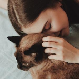 Pourquoi les chats ronronnent-ils ? Une énigme démystifiée