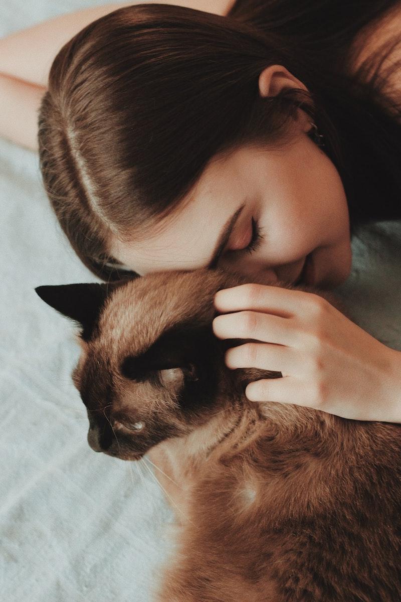 effet du ronronnement du chat sur l homme idée habitude chat raisons