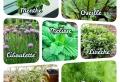 Plantes aromatiques vivaces – liste complète et astuces pour les cultiver