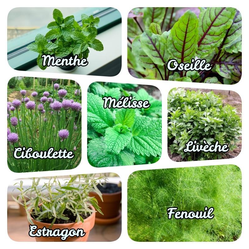 exemple de jardinière herbes aromatiques liste plante aromatique feuillage caduc