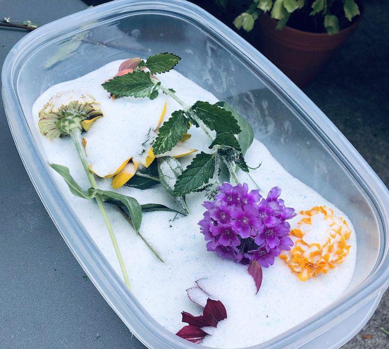 gel de silicium ou comment faire secher des roses et autres fleurs