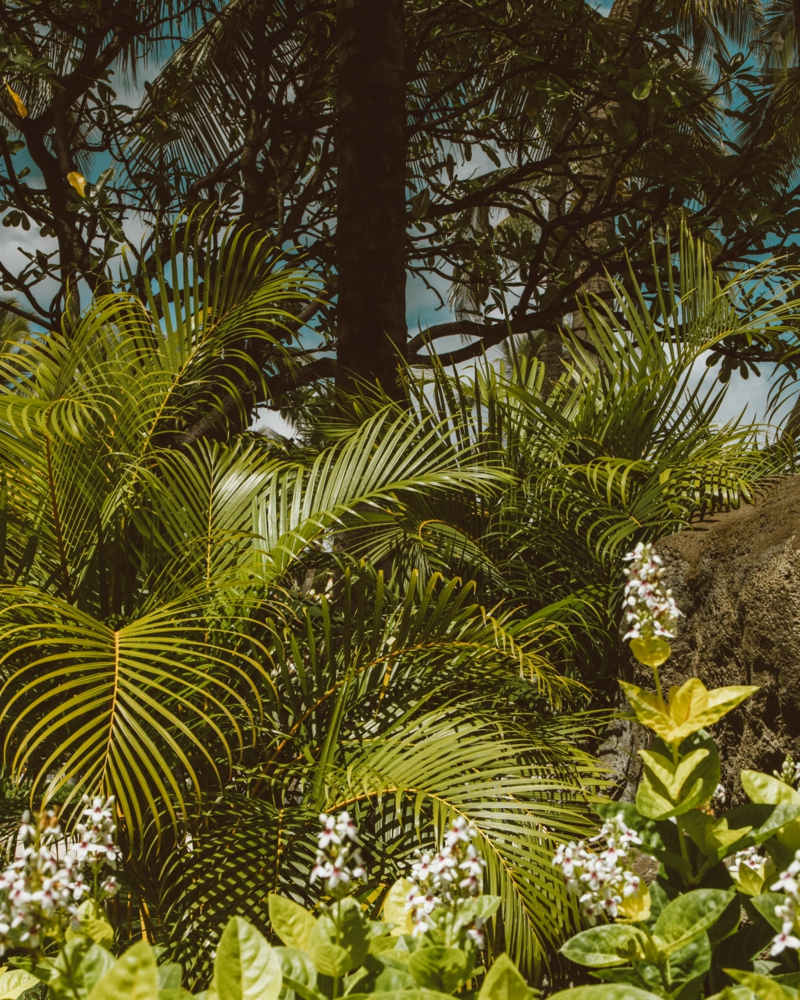 grande plante d intérieur facile d entretien palmier areca dans la nature