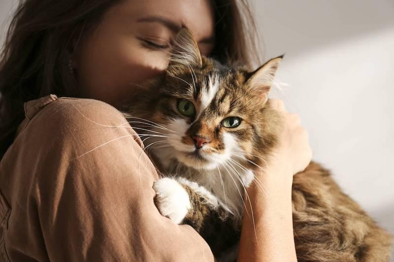 image assurance comment choisir chat aux yeux verts