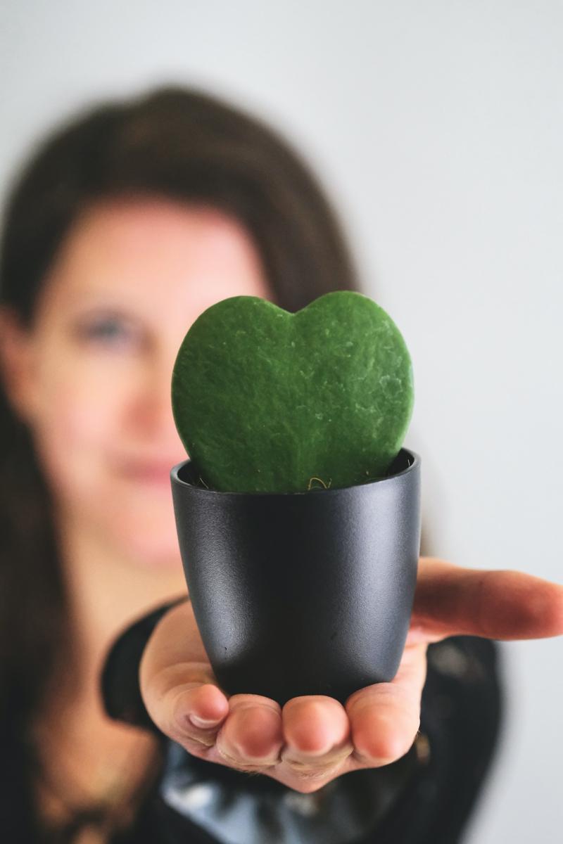 les plus belles plantes d intérieur une femme qui tiennent un petit hoya dans sa main