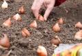 Bulbes d'automne à floraison printanière : choix, plantation et astuces