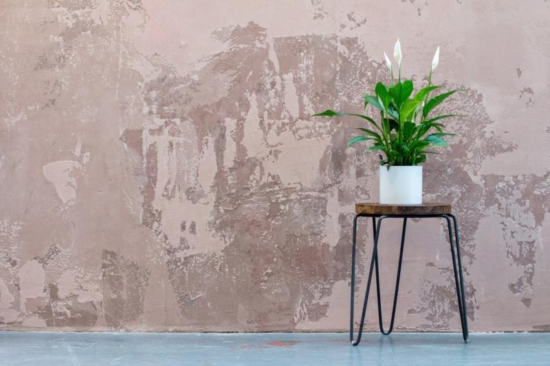 plante d intérieur fleurie sur une petite chaise devant un mur gris