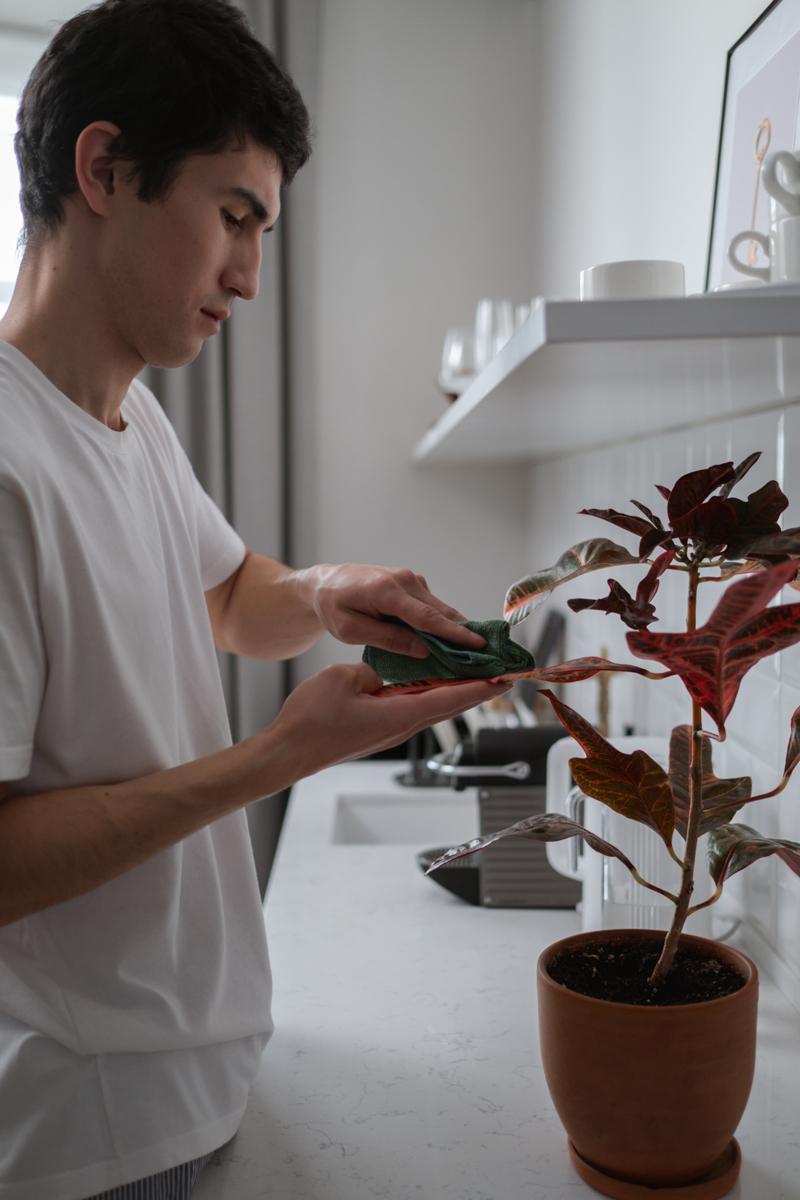 plante exterieur en pot entretien d un caladium en pot