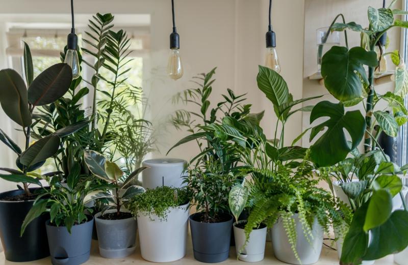 Plantes d'intérieur faciles d'entretien – invitez la nature chez soi !
