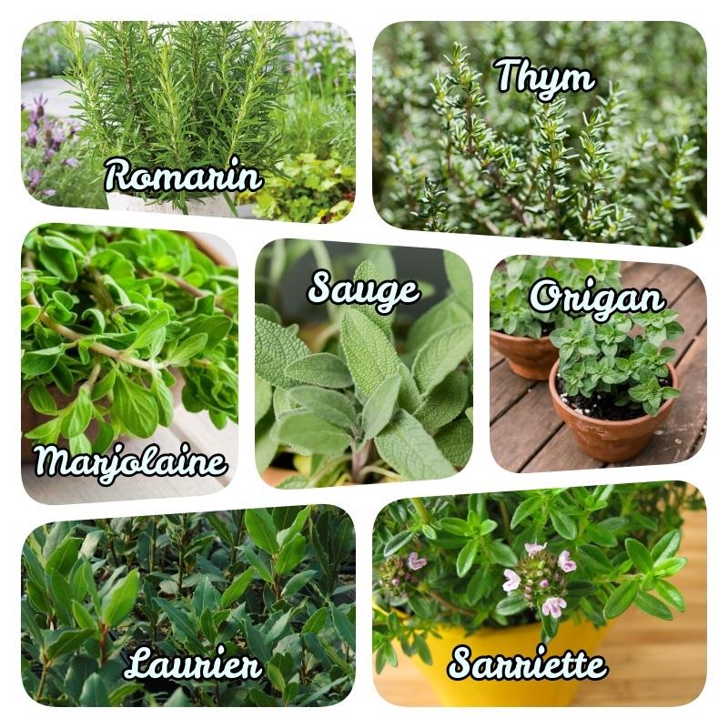 plantes aromatiques vivaces persistantes atomates liste complète