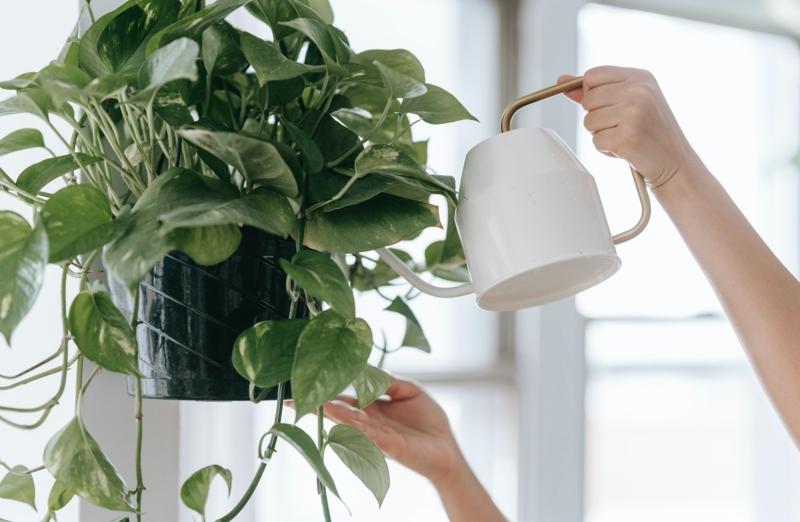 plantes d intérieur facile d entretien une femme qui arrose sa fleur suspendue