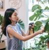 plantes d intérieur facile d entretien une fille qui soigne ses plantes