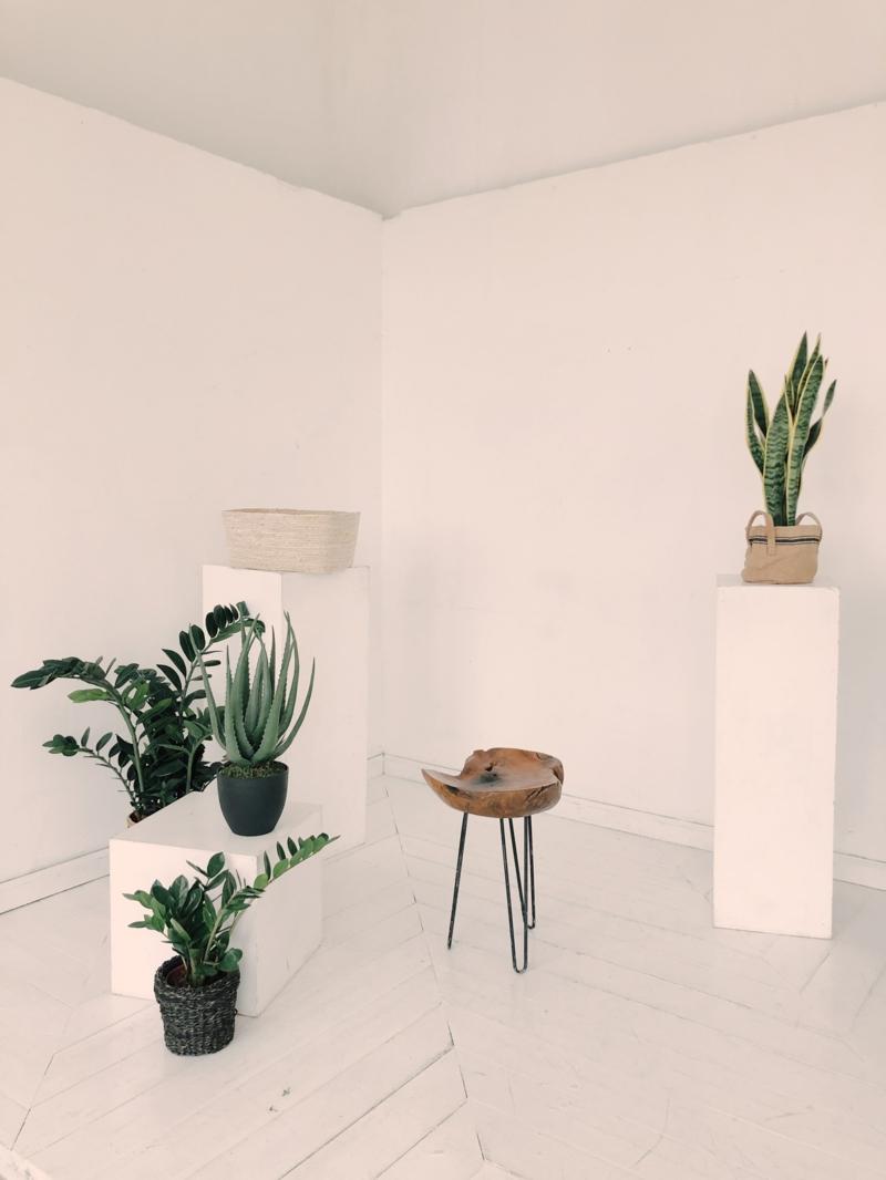 plantes d intérieur photos et noms aloe vera qui fait partie de la décoration