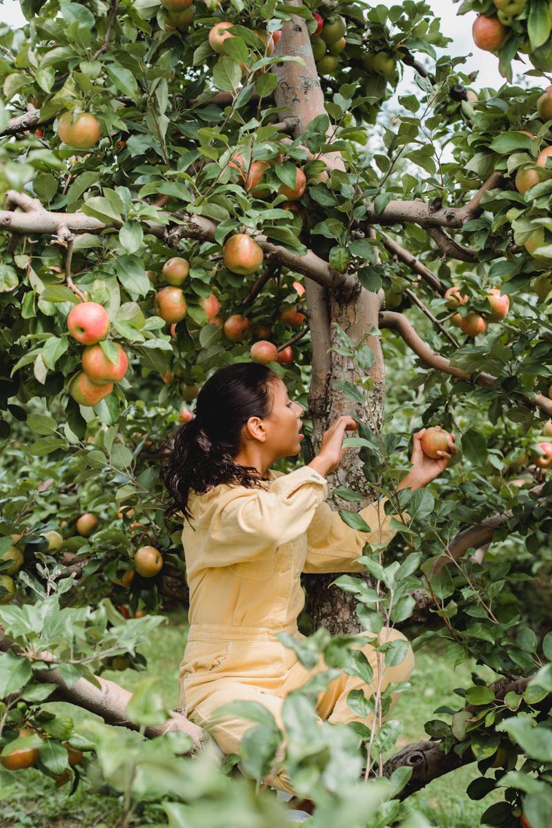 quand cueillir les pommes une fille sur un arbre qui ramasse des pommes