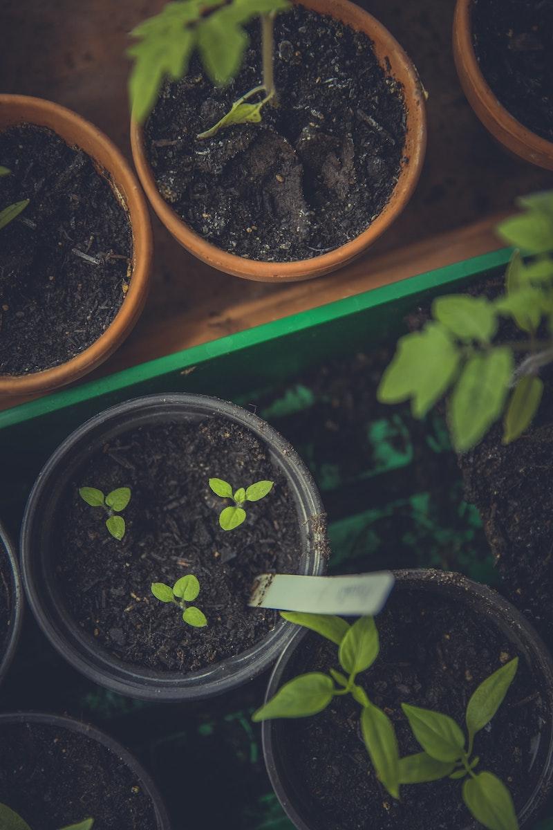 quand planter les aromates en pot ou en carré potager plantes aromatiques originales