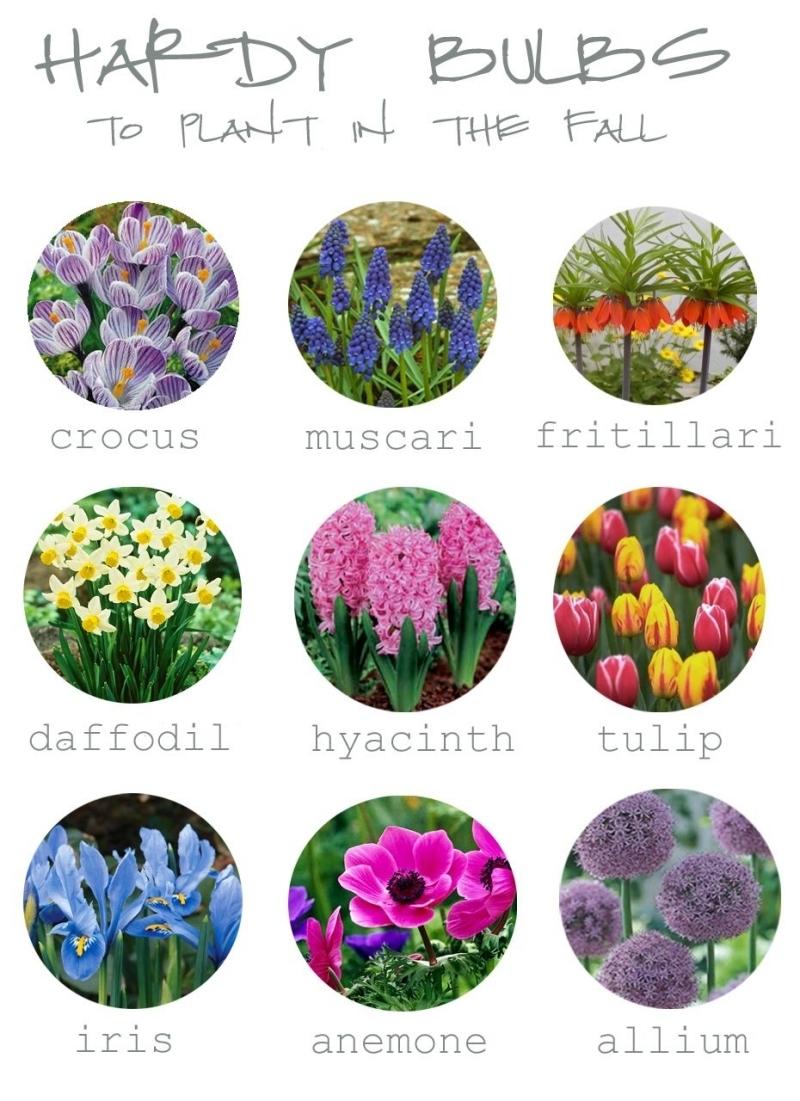 quand planter les bulbes variétés fleurs a floraison printanière