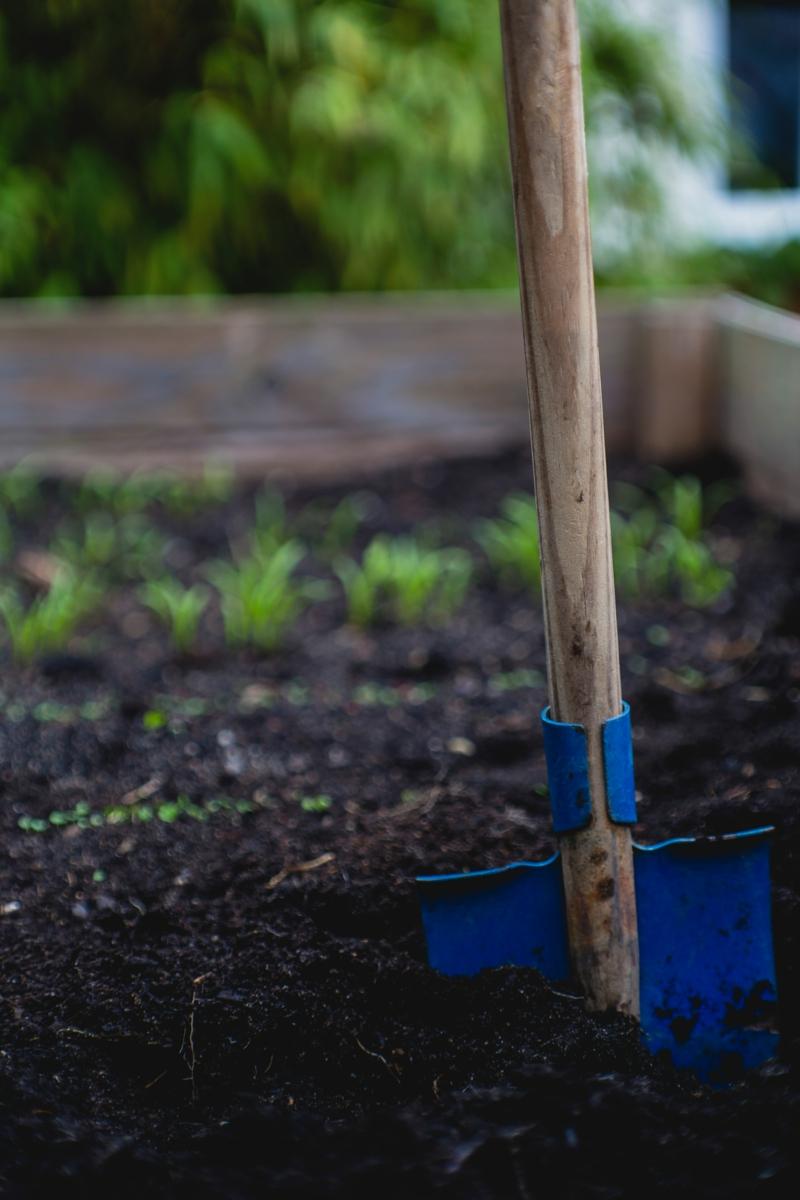 quand récolter les carottespelle enfoncée dans le sol
