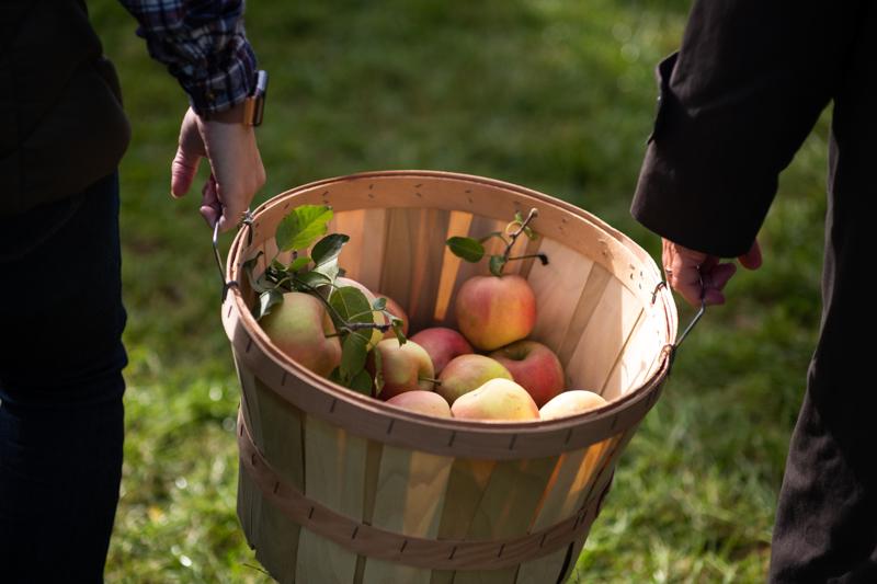 quand ramasser les pommes deux personnes qui portent un grand panier de pommes