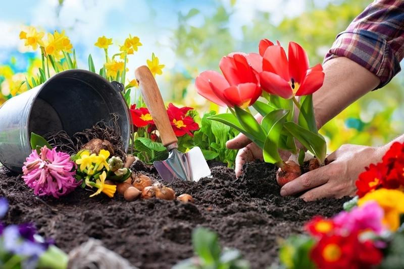 quelle fleur planter en octobre variétés bulbes automne floraison printemps