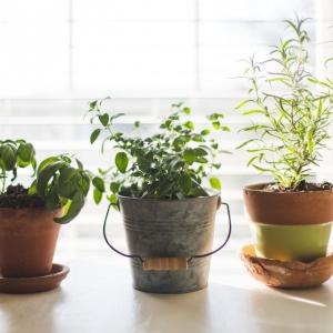 Plantes aromatiques vivaces - liste complète et astuces pour les cultiver