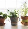 quels herbes aromatiques en pot et comment les cultiver à l intérieur de chez soi