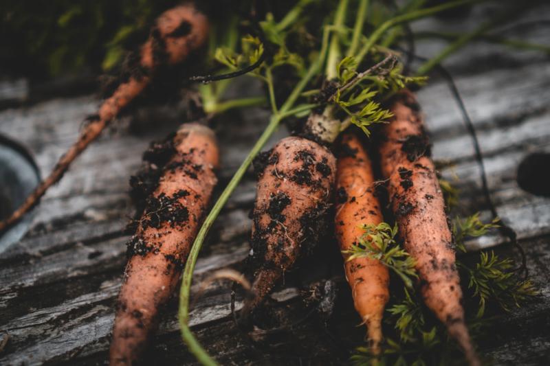 recolte carotte cinq carottes qui ont du tereau sur eux