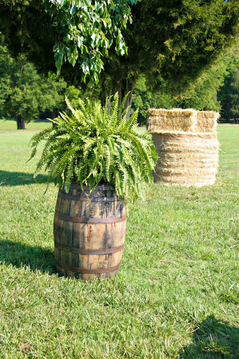 tonneau en bois pot de fleur d extérieur grand jardin avec gazon arbres