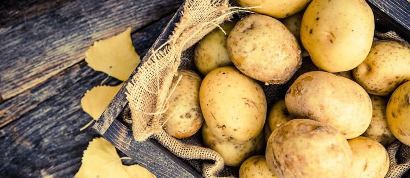 comment conserver les pommes de terre sans qu elles germent