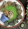 créer un mini jardin de plantes grasses idée tutoriel astuces