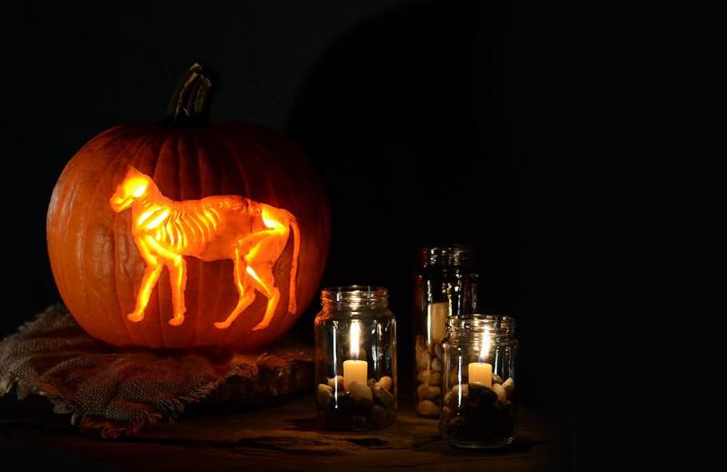 déco citrouille halloween forme de chat de sorcière sur la citrouille découpée