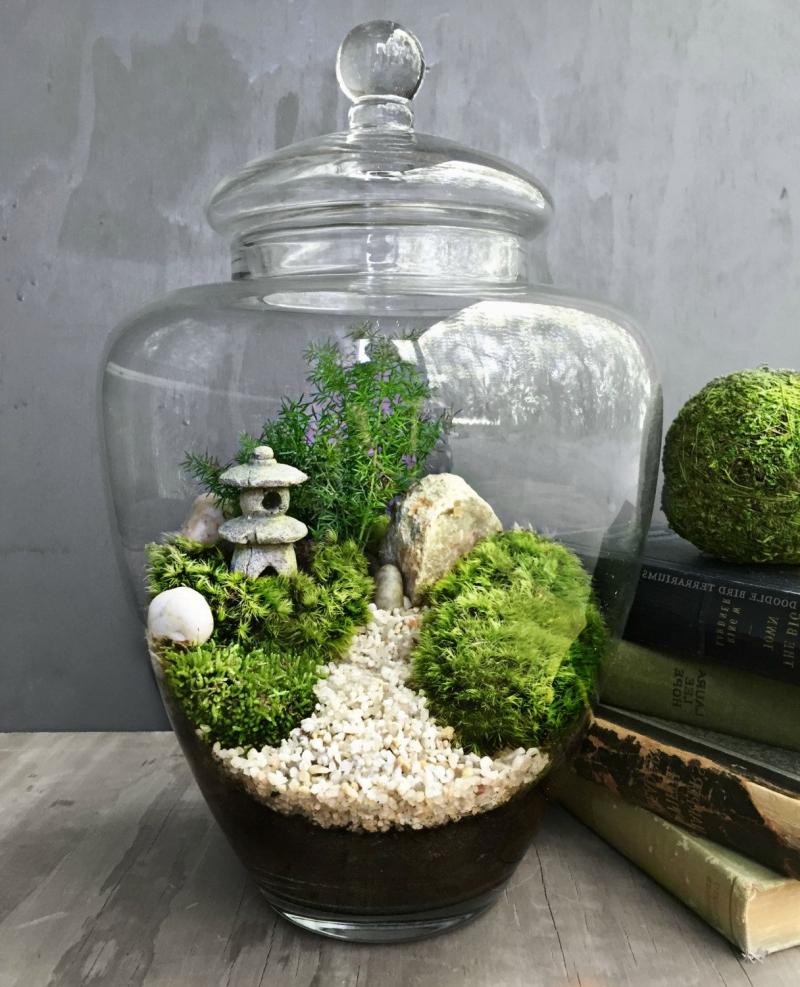 diy terrarium fermé contenant en verre couvercle succulentes