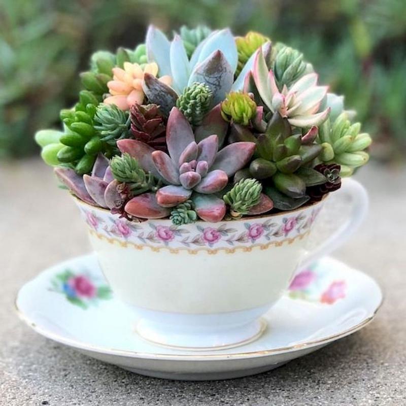 idée comment faire un terrarium plante grasse tasse thé