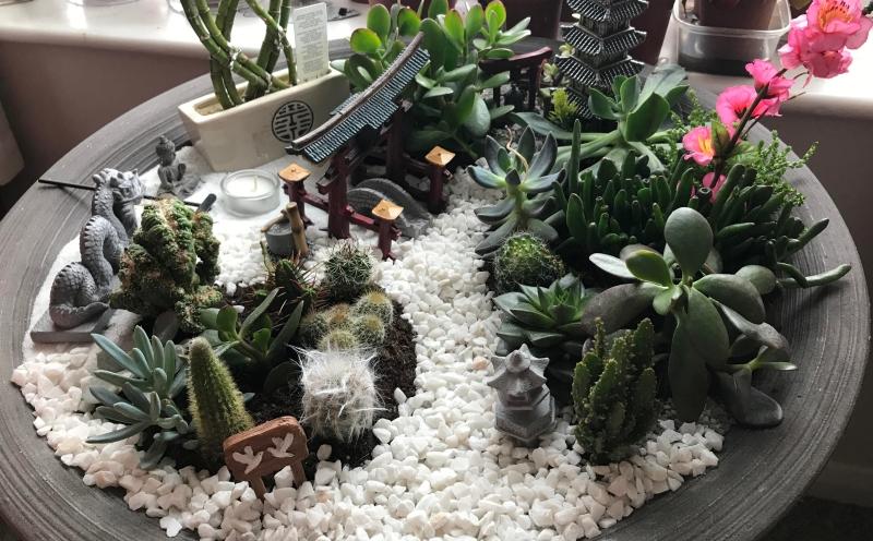 jardin japonais miniature plantes grasses succulentes statuette boudha jardin zen