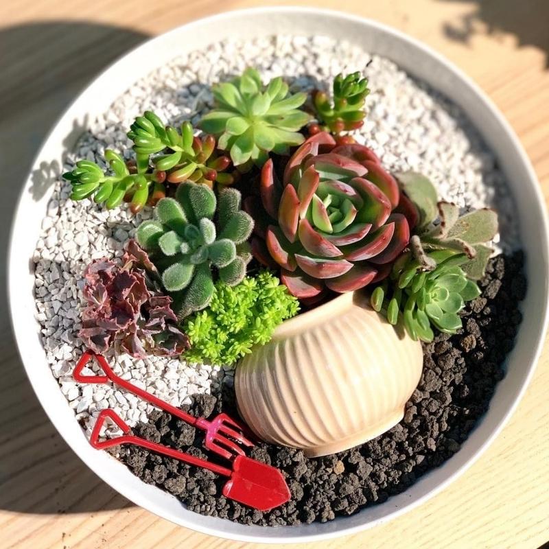 modele jardin exotique a faire soi même avec plante mini