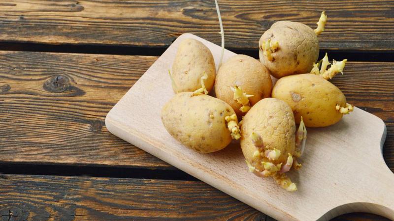 peut on manger des pommes de terre germées pommes de terres sur une planche de bois
