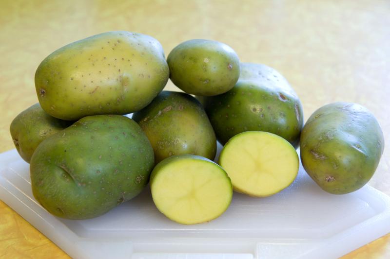 peut on manger des pommes de terre germées pommes de terres verdies