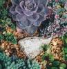 plante grasse exterieur resistant au gel cailloux pierre sol drainage