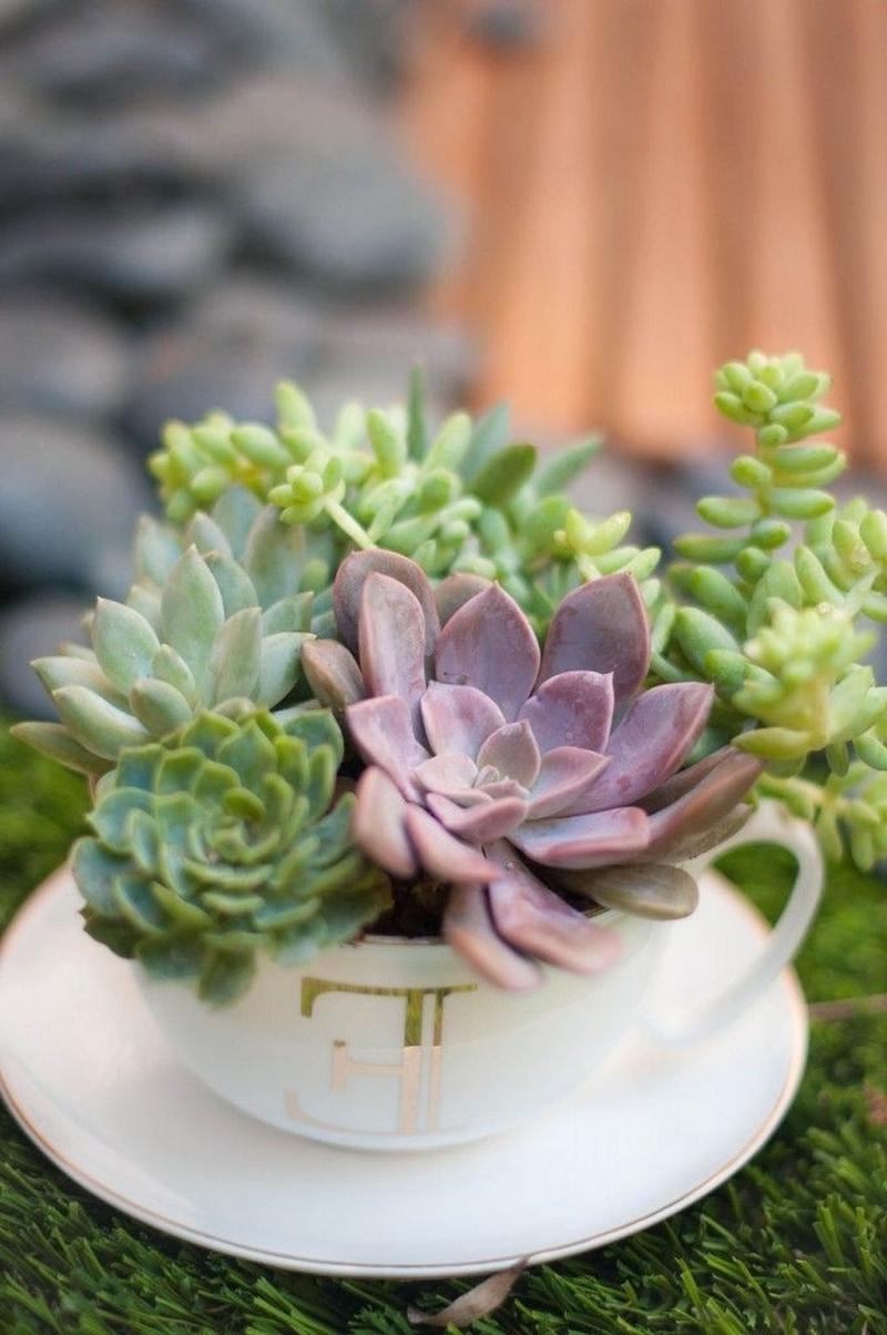 plante grasse exterieur resistant au gel tasse de thé