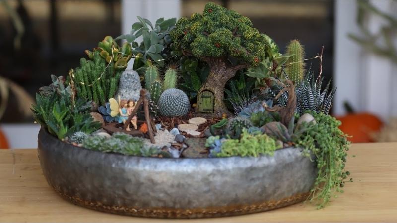 plante grasse retombante modèle mini jardin avec succulentes